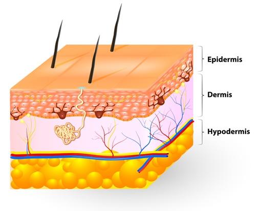 Skin-layer.jpg